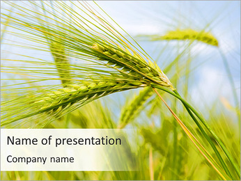 Wheat In The Field PowerPoint Template