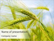 Blé Dans Le Domaine Modèles des présentations  PowerPoint