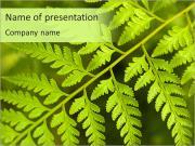 Macro Fern Leaf PowerPoint Templates