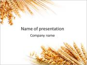 Wheat Harvest PowerPoint Templates