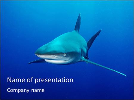 dangerous shark powerpoint template & backgrounds id 0000003900, Modern powerpoint