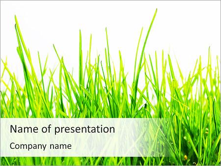 fresh green grass powerpoint template & backgrounds id 0000003903, Modern powerpoint