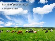 Vaches sur le terrain Modèles des présentations  PowerPoint