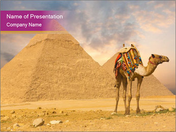 Camel Standing near Pyramids PowerPoint Template