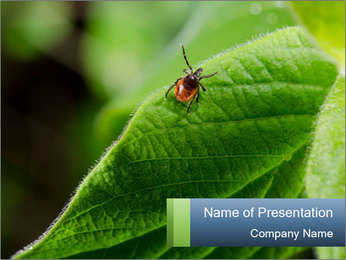 Tiny Parasite PowerPoint Template