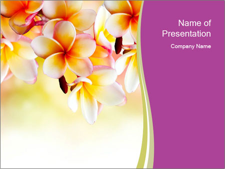 Frangipani Flowers Powerpoint Template Backgrounds Id 0000030482