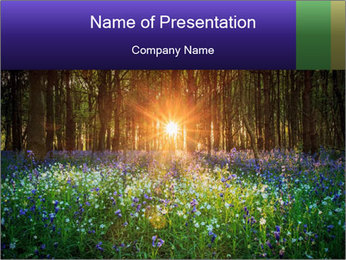 Sunrise in Woods PowerPoint Template