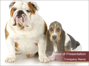 Bulldog and Basset Hound Puppy PowerPoint Template