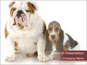 Bulldog and Basset Hound Puppy PowerPoint Templates