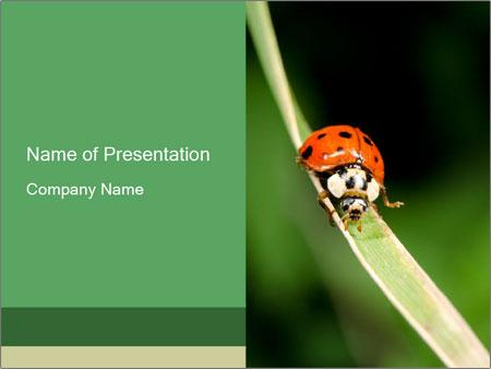 Ladybird on Grass Blade PowerPoint Template, Backgrounds & Google ...