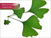 Fresh Medicine Plant PowerPoint Templates