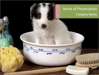 Bath for Puppy PowerPoint Template