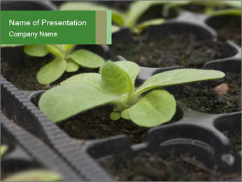 Organic Ggreenhouses PowerPoint Template