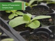 Organic Ggreenhouses PowerPoint Templates
