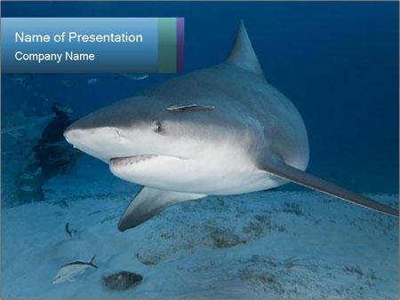 shark fin powerpoint template & backgrounds id 0000031212, Modern powerpoint