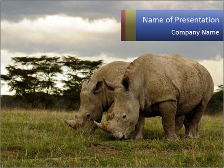 Nakuru national park in kenya powerpoint template backgrounds id nakuru national park in kenya powerpoint templates toneelgroepblik Images