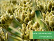 Majestic Hogweed PowerPoint Templates
