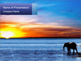 Elephant In Sri Lanka PowerPoint Template