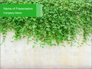 Wall Covered in Green Plants PowerPoint Templates
