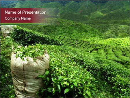 Kenya powerpoint template smiletemplates tea plantation in india powerpoint templates toneelgroepblik Image collections