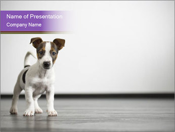 Homeless Puppy PowerPoint Template