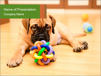 Bullmastiff Puppy PowerPoint Template