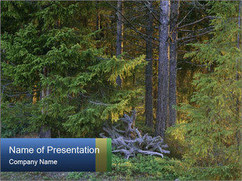 Forest in Scandinavia PowerPoint Template
