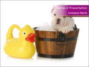 Wash Puppy PowerPoint Templates