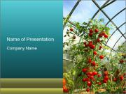Organic Tomatoes PowerPoint Templates