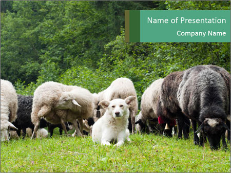 Sheep Herd And Dog Powerpoint Template Backgrounds Google Slides