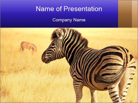 Zebra in savanna powerpoint template backgrounds google slides zebra in savanna powerpoint template toneelgroepblik Images