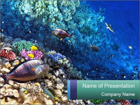 Underwater in egypt powerpoint template backgrounds google slides underwater in egypt powerpoint template toneelgroepblik Choice Image
