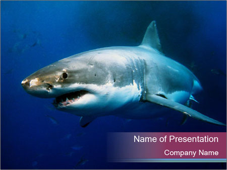 Jaws Shark Powerpoint Template Smiletemplates