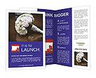 0000038265 Brochure Templates