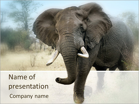 Wild Elephant Powerpoint Template Backgrounds Google Slides Id