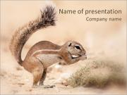 Small Gopher PowerPoint Templates