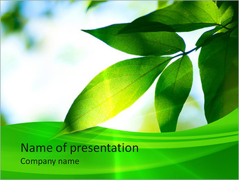 Green Plant In Sun Light PowerPoint Template