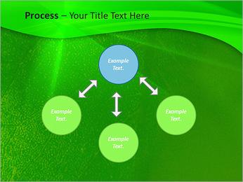 Plante verte dans Sun Light Modèles des présentations  PowerPoint - Diapositives 71