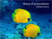 Yellow Exotic Fish PowerPoint Templates