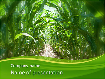 Maize Harvest PowerPoint Template