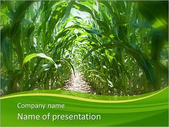 Récolte de maïs Modèles des présentations  PowerPoint - Diapositives 1