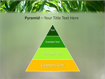 Récolte de maïs Modèles des présentations  PowerPoint - Diapositives 10