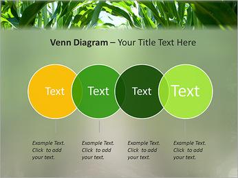 Récolte de maïs Modèles des présentations  PowerPoint - Diapositives 12