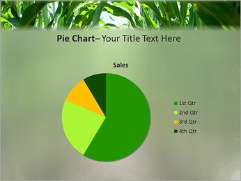 Récolte de maïs Modèles des présentations  PowerPoint - Diapositives 16