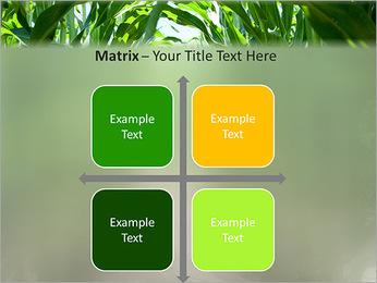Récolte de maïs Modèles des présentations  PowerPoint - Diapositives 17
