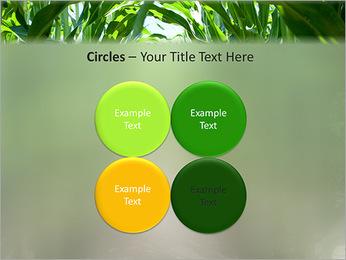 Récolte de maïs Modèles des présentations  PowerPoint - Diapositives 18