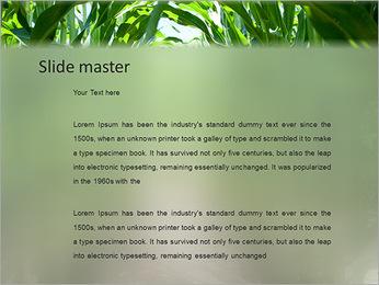 Récolte de maïs Modèles des présentations  PowerPoint - Diapositives 2