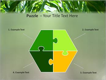 Récolte de maïs Modèles des présentations  PowerPoint - Diapositives 20