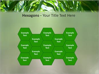 Récolte de maïs Modèles des présentations  PowerPoint - Diapositives 24