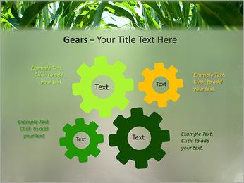 Récolte de maïs Modèles des présentations  PowerPoint - Diapositives 27
